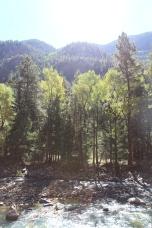 #Forêt