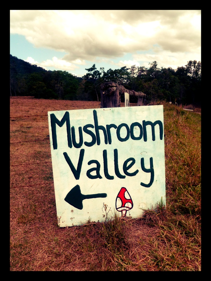 Mushroom Valley - Présentation VoyageDesFruits