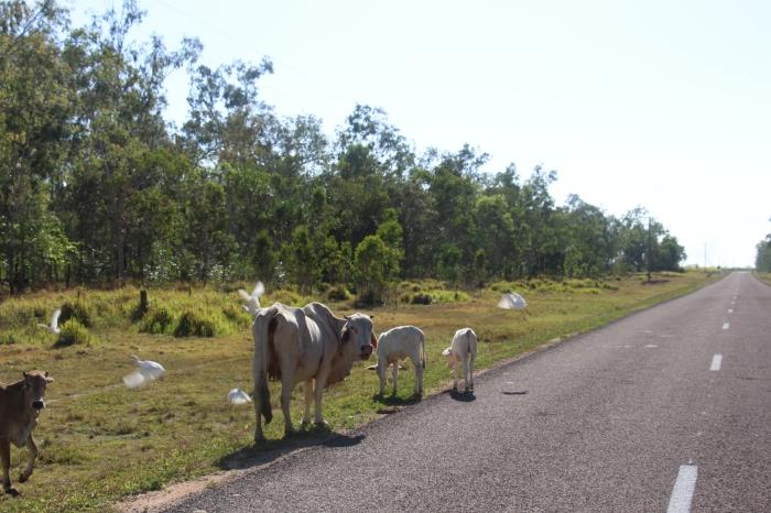 Obstacles sur la route ^^