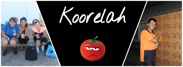 Koorelah Farms - VoyageDesFruits