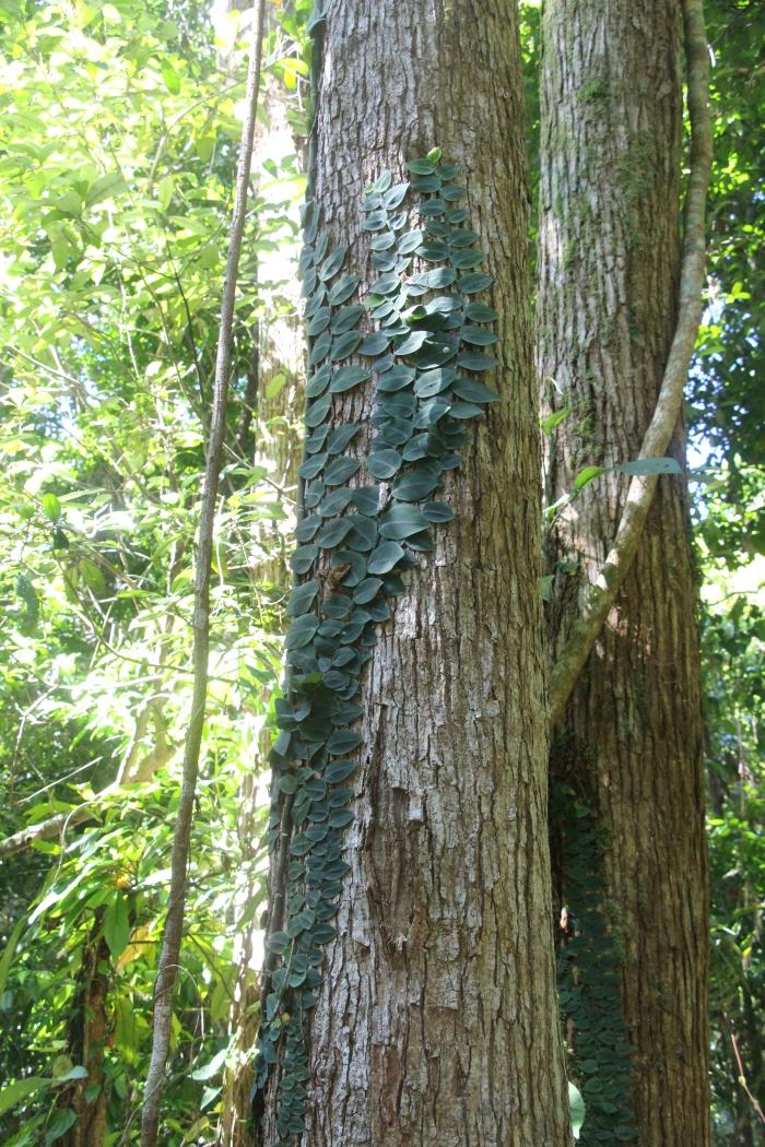 Marrja Botanical Walk - VoyageDesFruits
