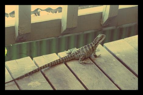 #Iguane