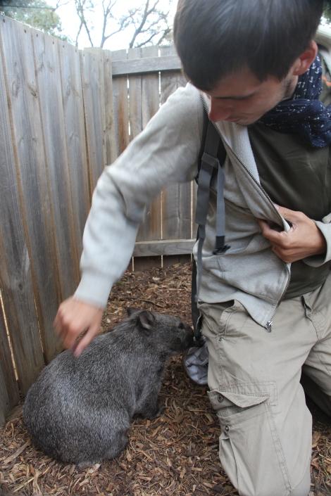 Kévin et le bébé Wombat