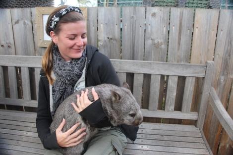 Bébé Wombat - VoyageDesFruits (2)