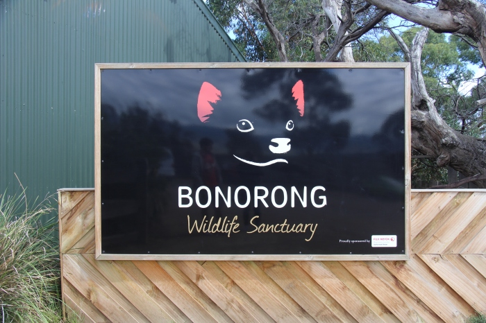Bonorong - VoyageDesFruits