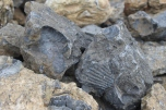 #FossilCliffs