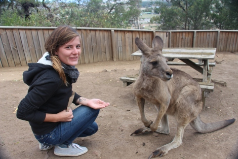Nourri les kangourous: facile !