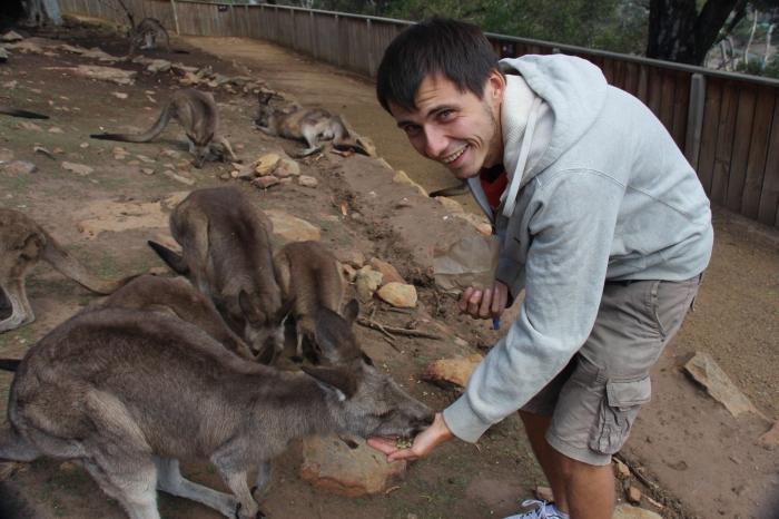 Kangourous - VoyageDesFruits (4)