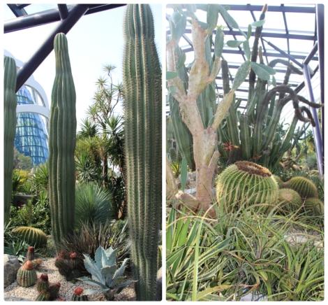 Jardin Botanique Singapour - VoyageDesFruits