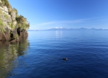 Canard sur le lac Taupo