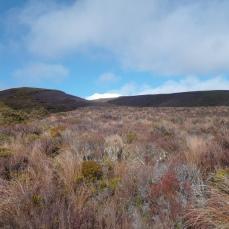 Le Mont Ruapehu au loin