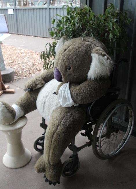 koala-hospital-voyagedesfruits